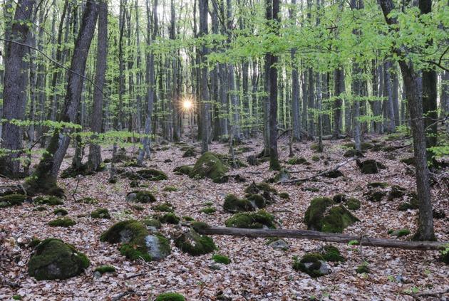 Gässlösa Naturreservat, Halland