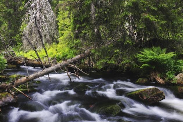 Njupån, Fulufjällets Nationalpark