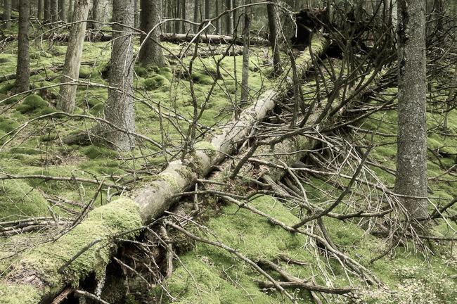 Klippans Naturreservat, Hindås