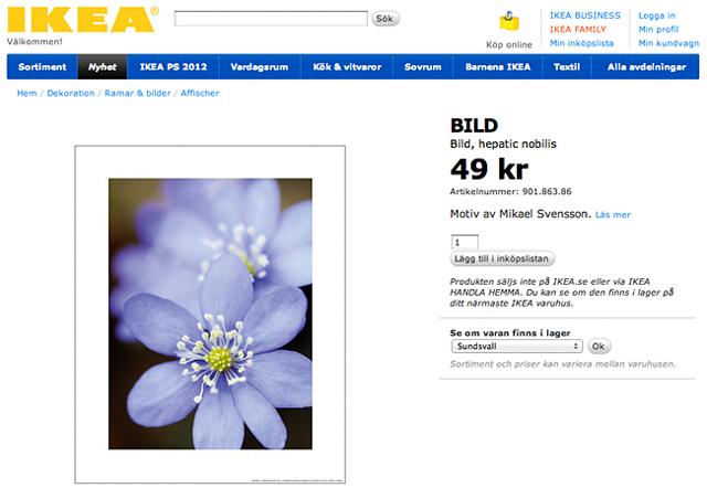 IKEA – blåsippor