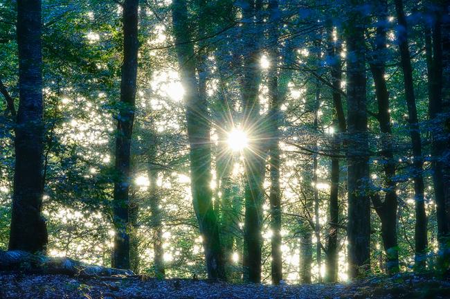 Bokförslaget – Nordiskt Ljus