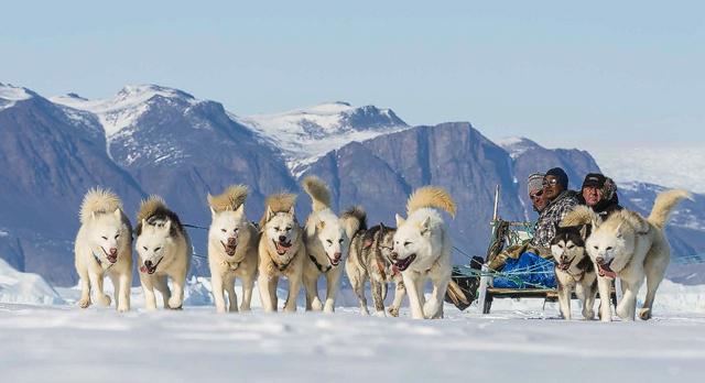 Hundspann i Grönland