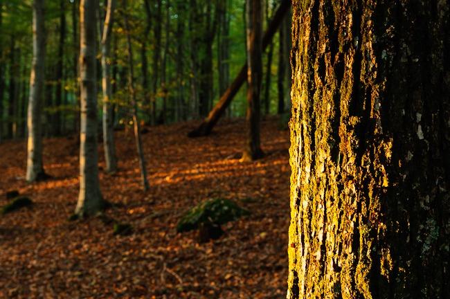 Rådasjön Naturreservat, Mölnlycke