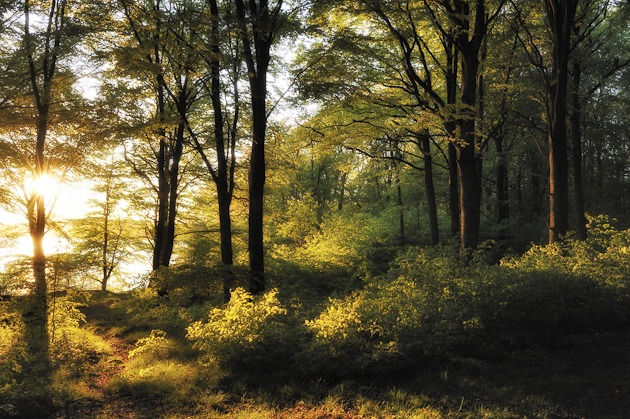 Gäddevik Naturreservat, Halland