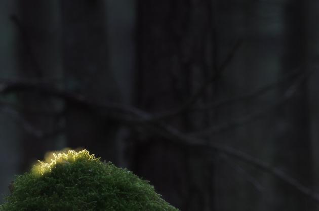 Ljungås Naturreservat