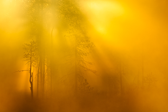 Nordiskt Ljus i Camera Natura