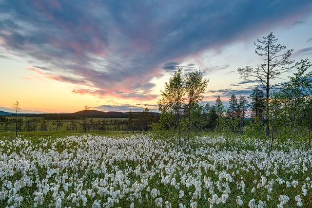 Koppången Naturreservat, Dalarna