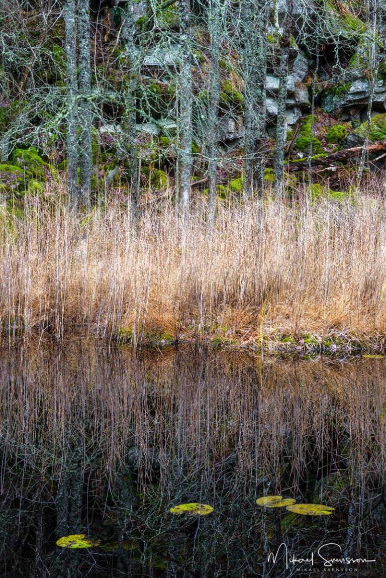 Odenssvaletjärn, Delsjöområdet. Foto: Mikael Svensson, www.mikaelsvensson.com