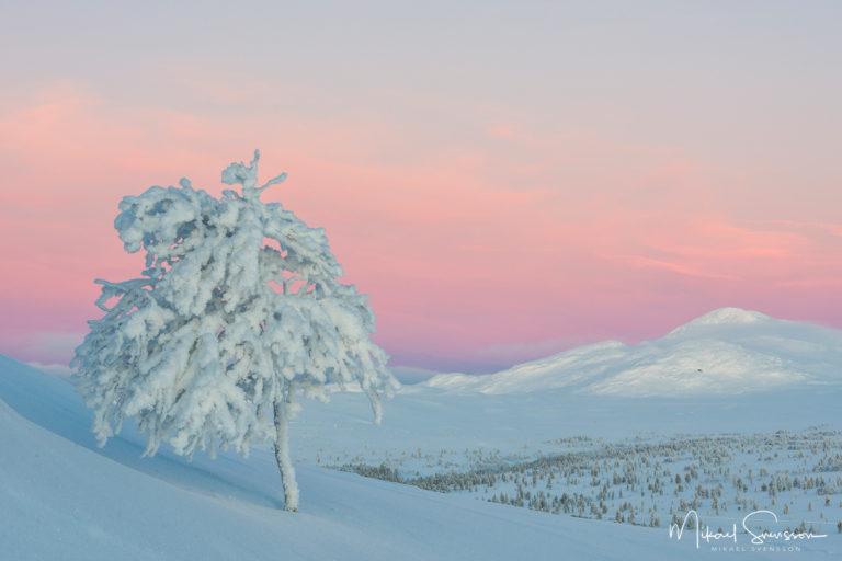 Valdalsfjellet, Hedmark fylke, Norge. Foto: Mikael Svensson, www.mikaelsvensson.com