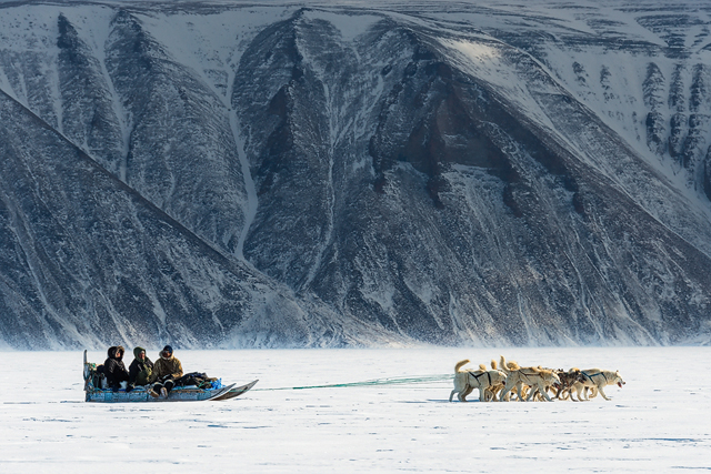 Dog sledding in Greenland.