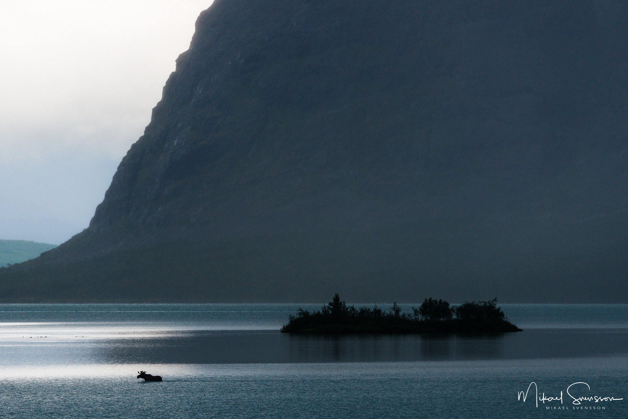 Silhouette of a moose swimming in a lake by an island and towering cliff