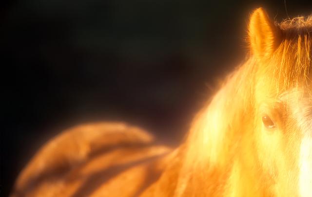 Gyllene häst