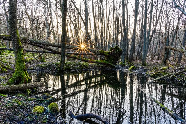 Hördalen Naturreservat. Foto: Mikael Svensso