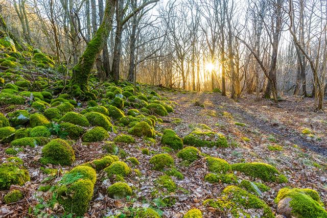 Hördalen Naturreservat, Halland