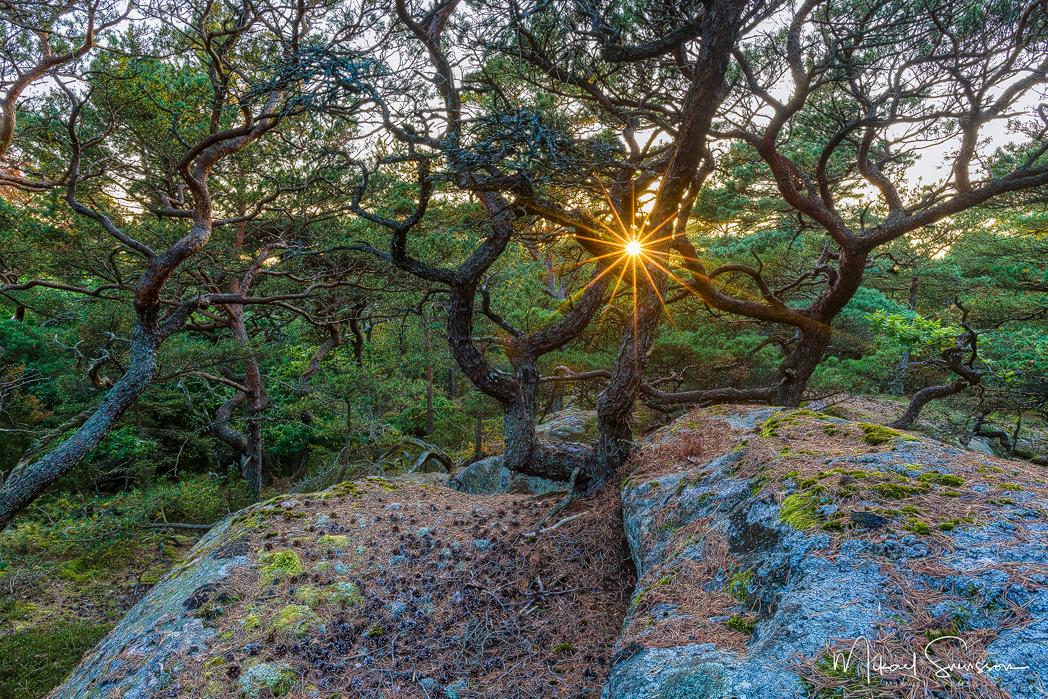 Särö Västerskog Naturreservat, Halland. Foto: Mikael Svensson