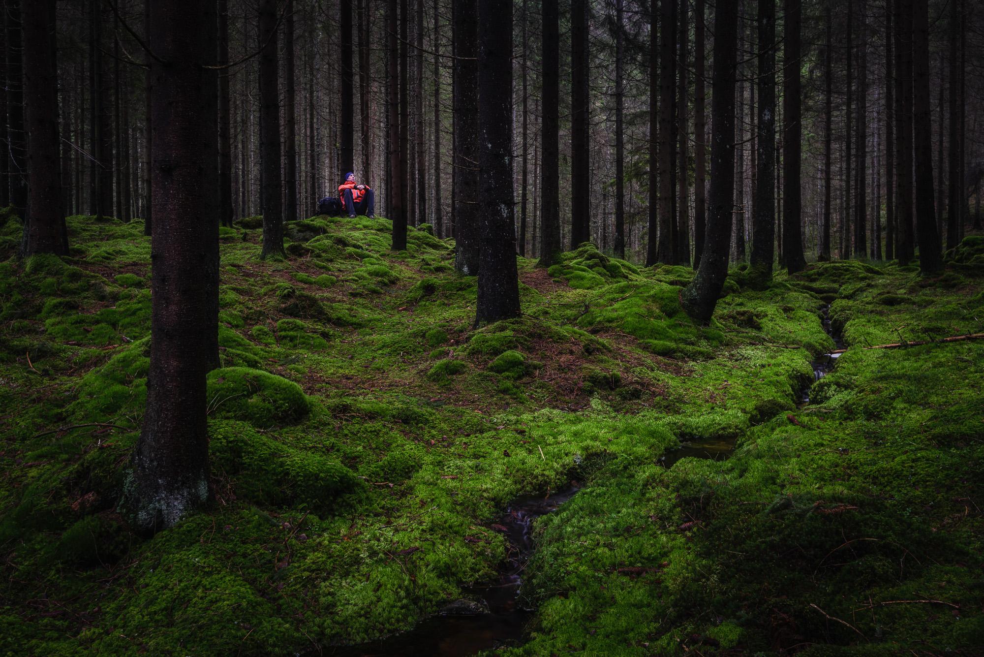 Härskogen, Härryda kommun. Foto: Mikael Svensson