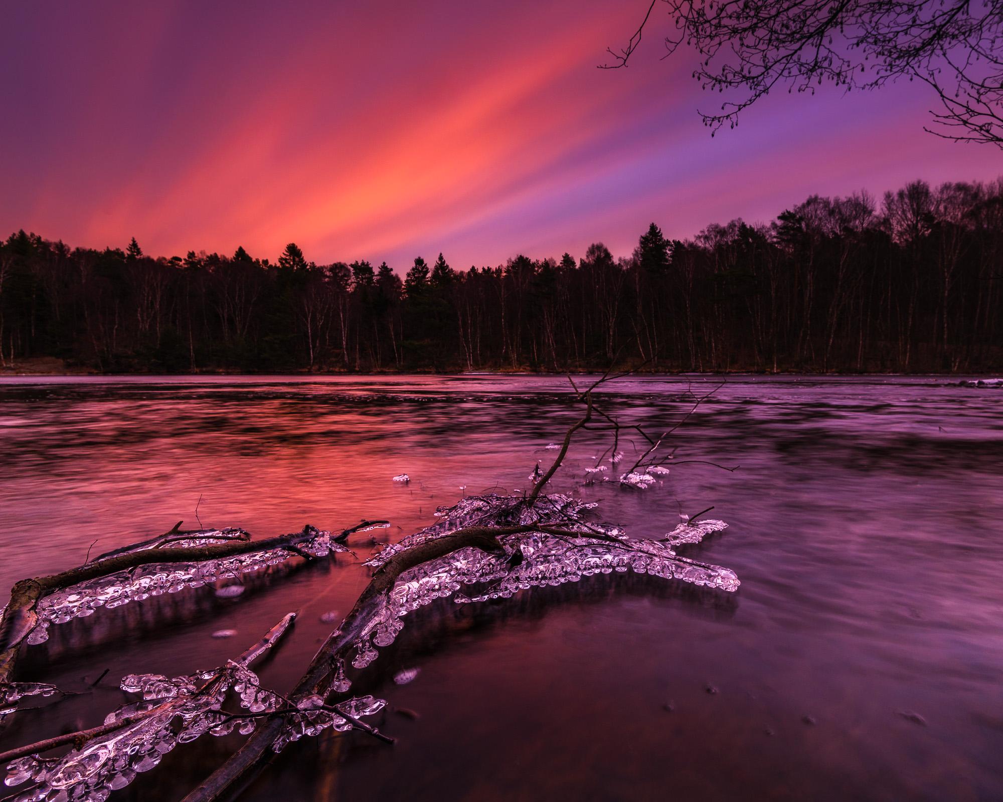 Is på grenar vid soluppgång i Stora Delsjön. Delsjön - där stad och vildmark möts