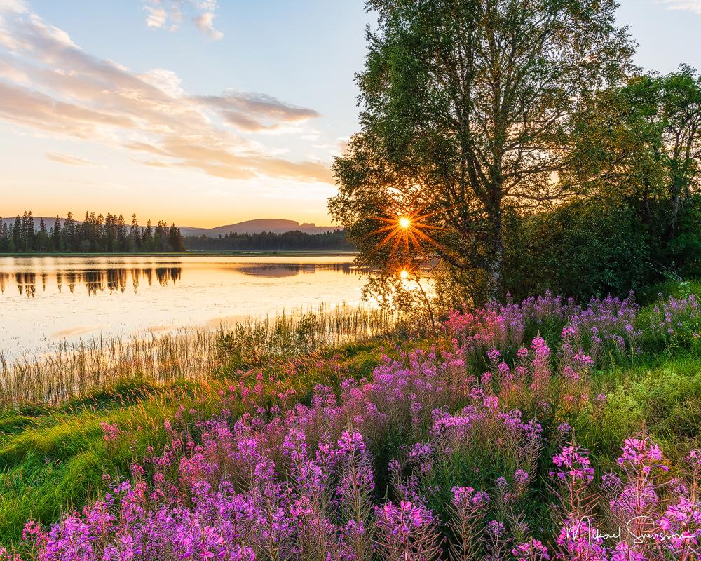 Långnässjön, Örnsköldsvik kommun
