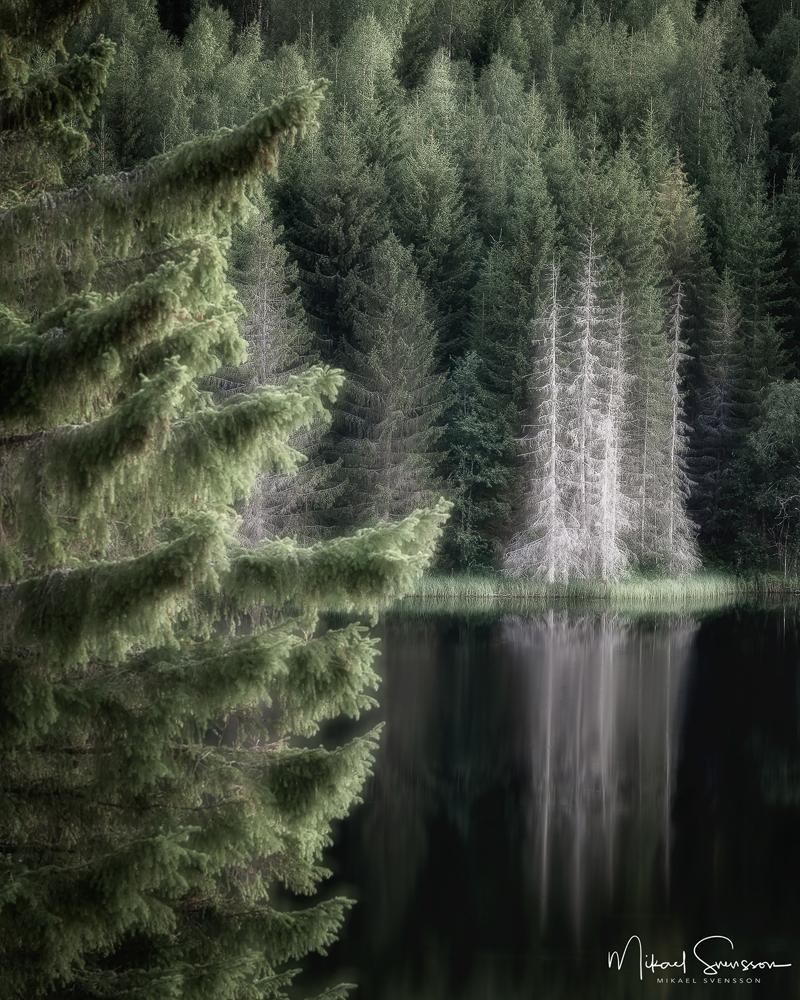Nässjösjön, Örnsköldsvik kommun