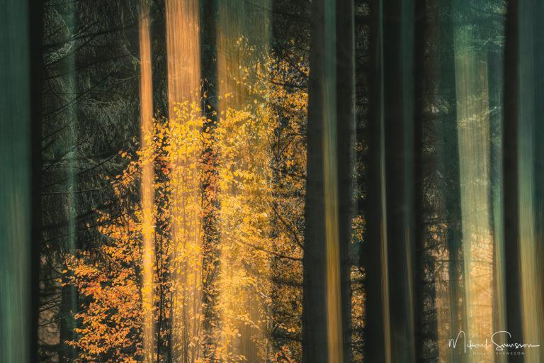 Höstfärger i Gunnebo skogen, Mölndal.
