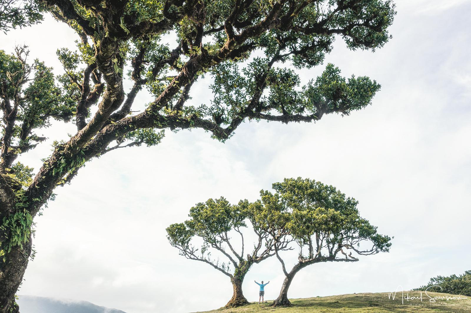 Fanal, Madeira