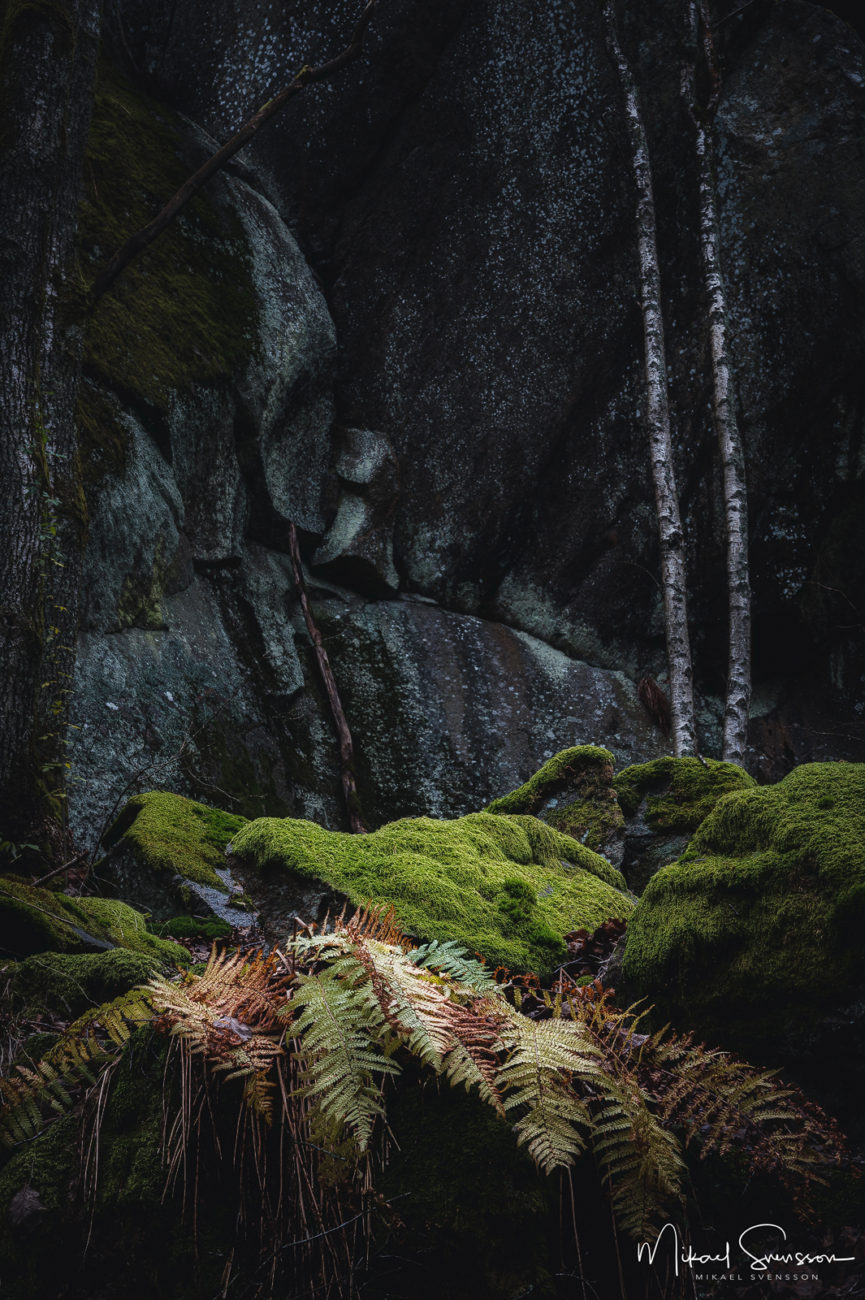 Sandsjöbacka Naturreservat, Mölndal
