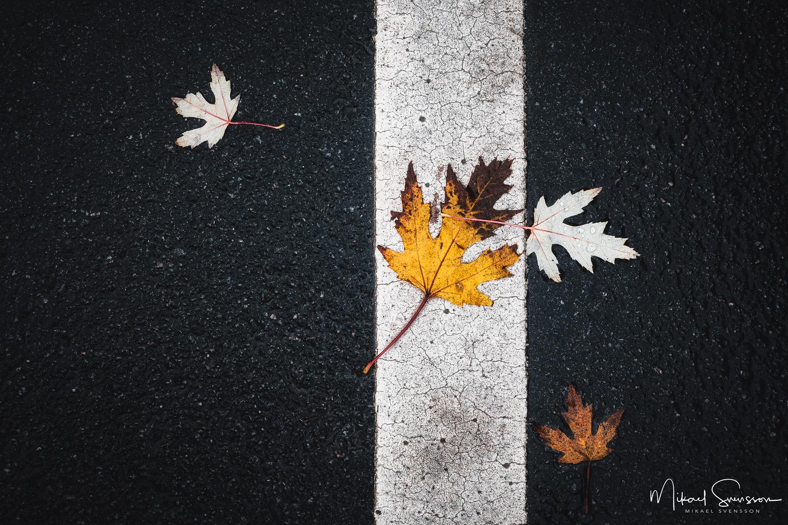 Höstlöv på asfalt