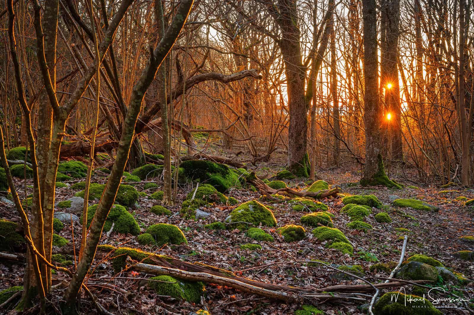 Solnedgång vid Hördalens naturreservat, Kungsbacka kommun.