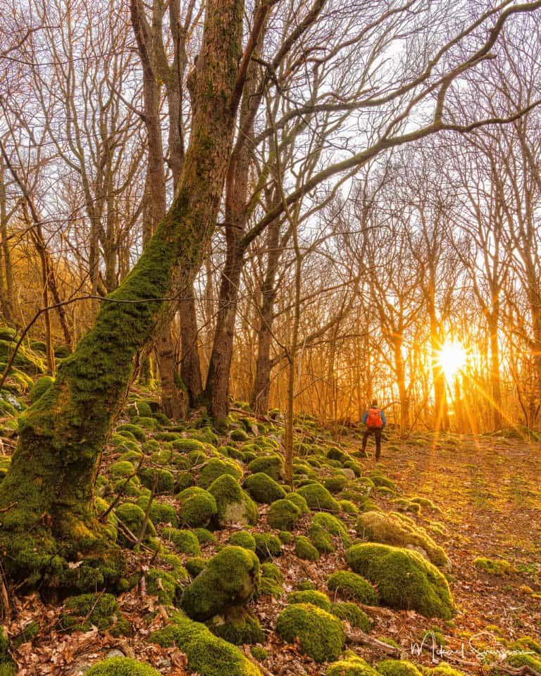 Solnedgång vid Hördalens naturreservat.