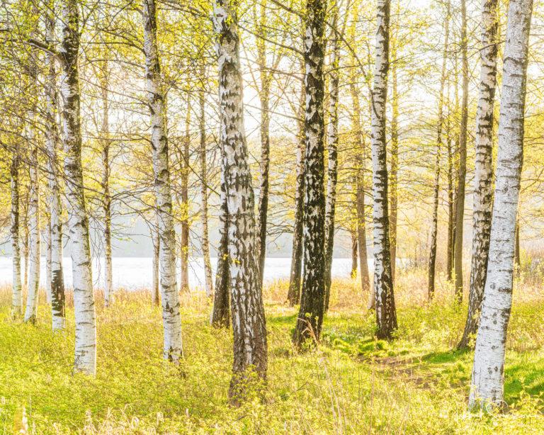 Landvetter, Härryda kommun