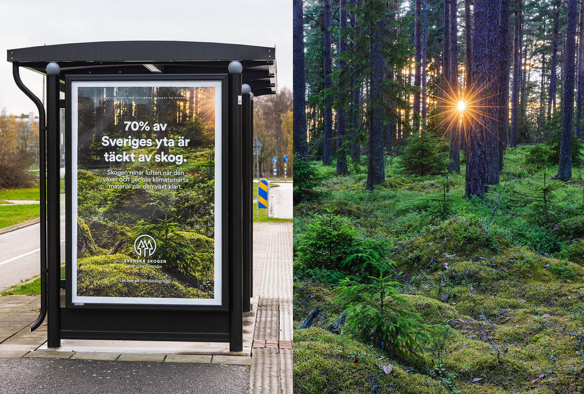 Svenska skogen