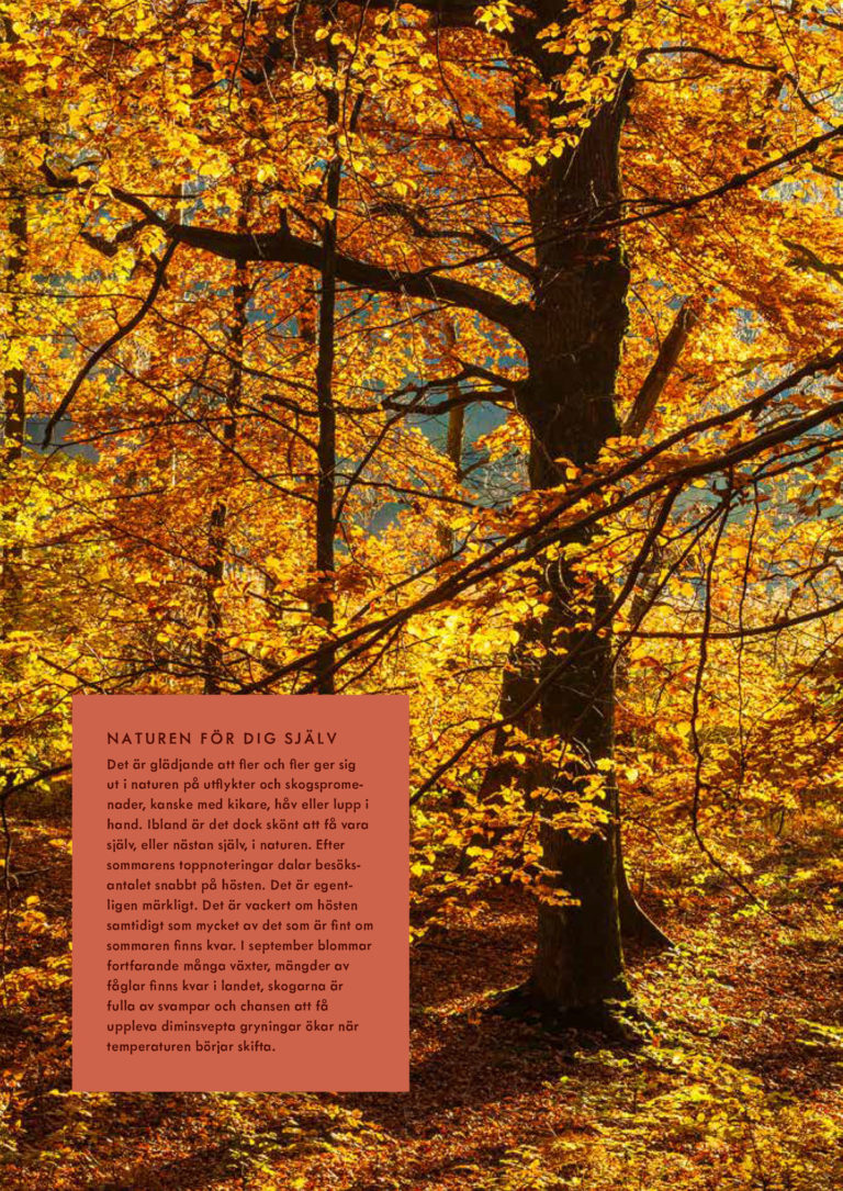 """Bild med i boken """"Ut i naturen"""""""
